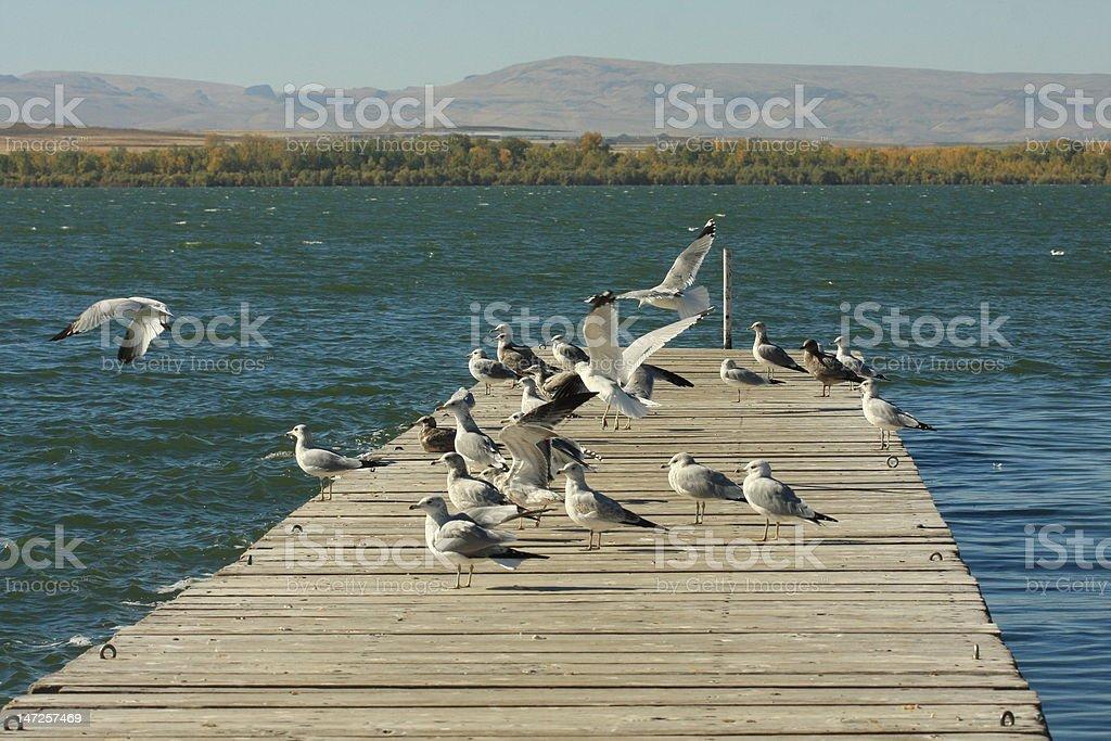Seagulls Waiting stock photo