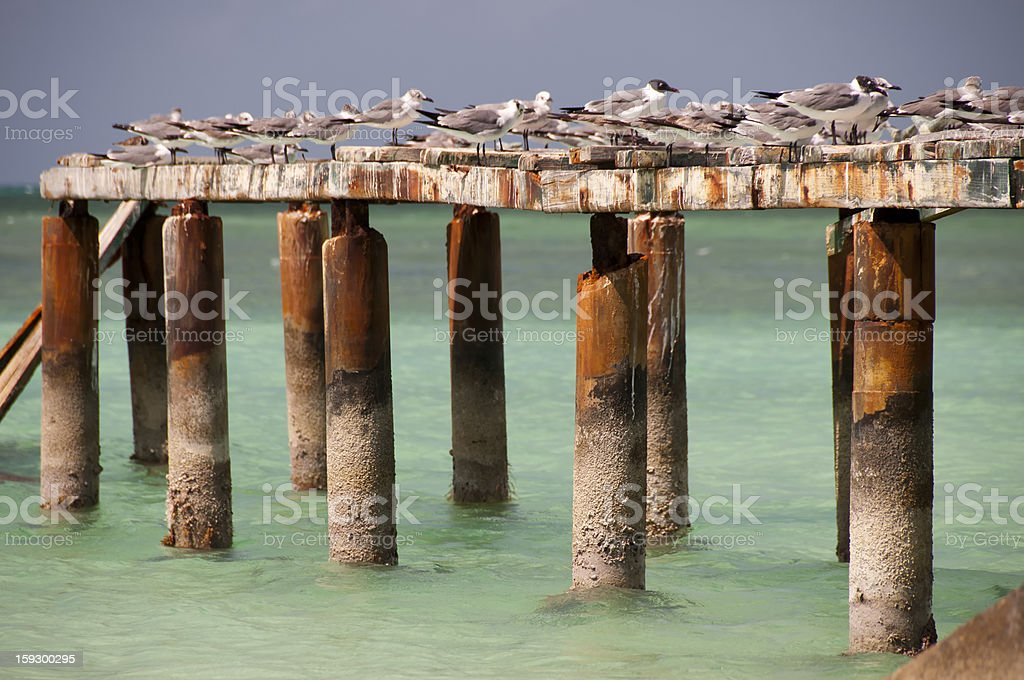 Seagulls with ruins of port Cayo Blanco, Cuba royalty-free stock photo