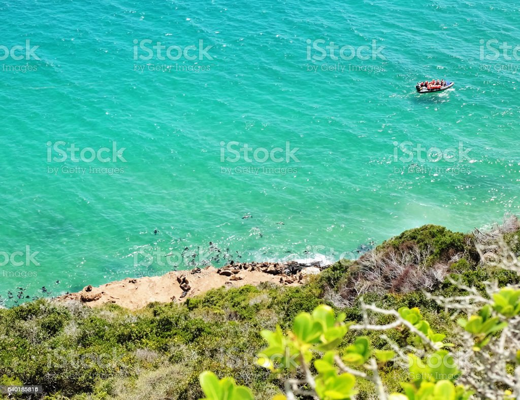 Seal colony with boat full of sightseers, seen from above stock photo