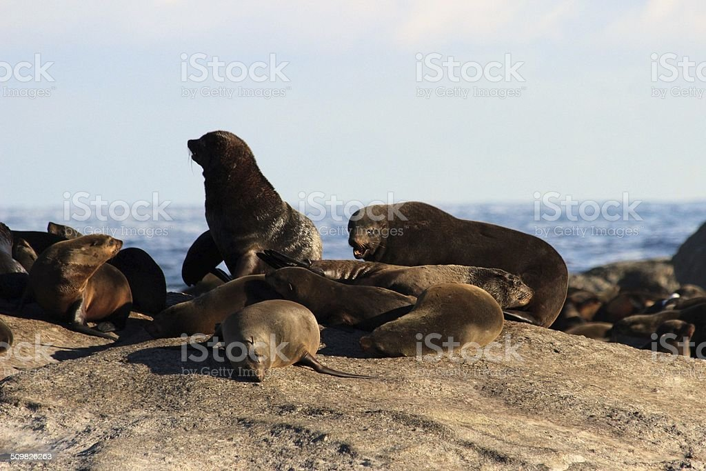 Seal Island at Hout Bay, South Africa stock photo