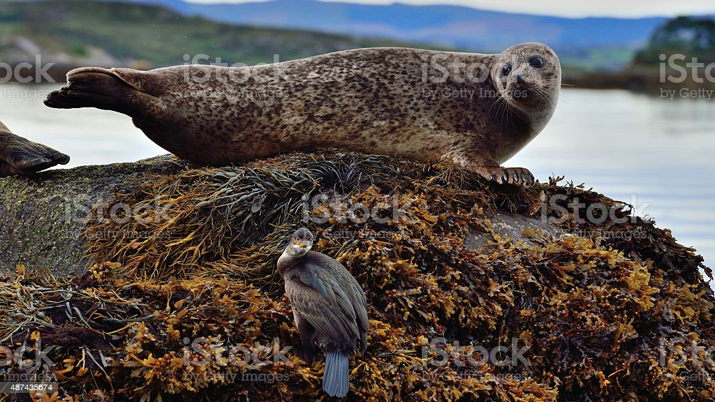 Seal Island, Garinish Island / Ireland stock photo