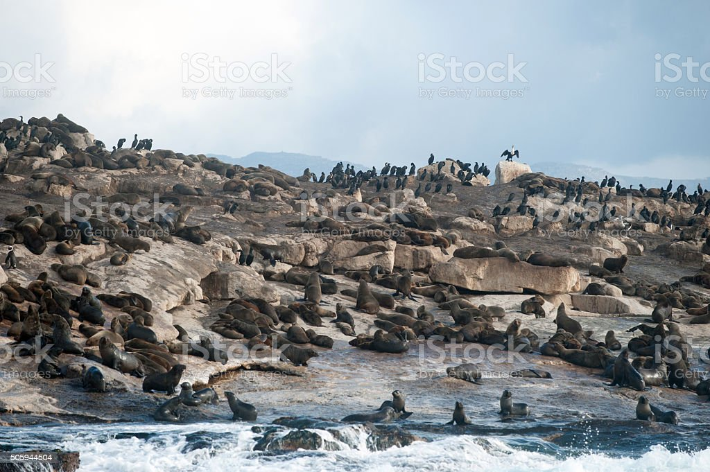 Seal Island in False Bay, South Africa stock photo