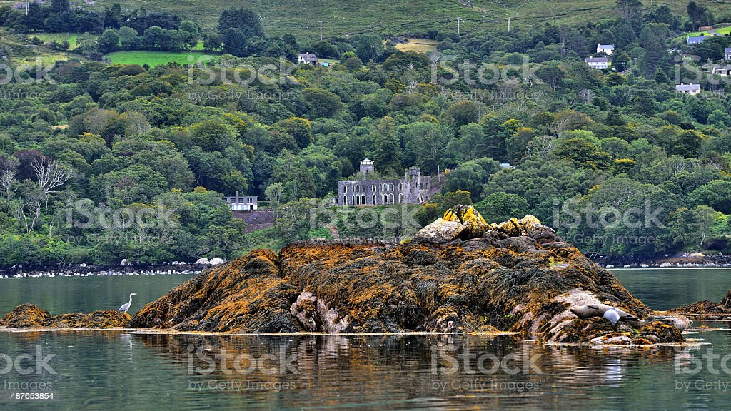 Seal Island / Ireland stock photo