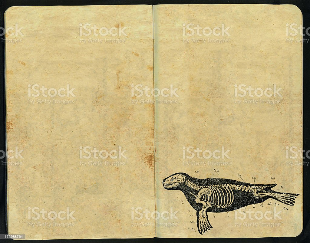 Seal morphology Sketch Pad royalty-free stock photo