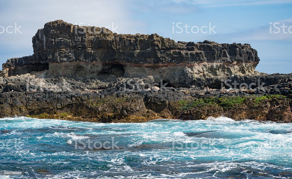 Seal rock of Phillip island Australia. stock photo