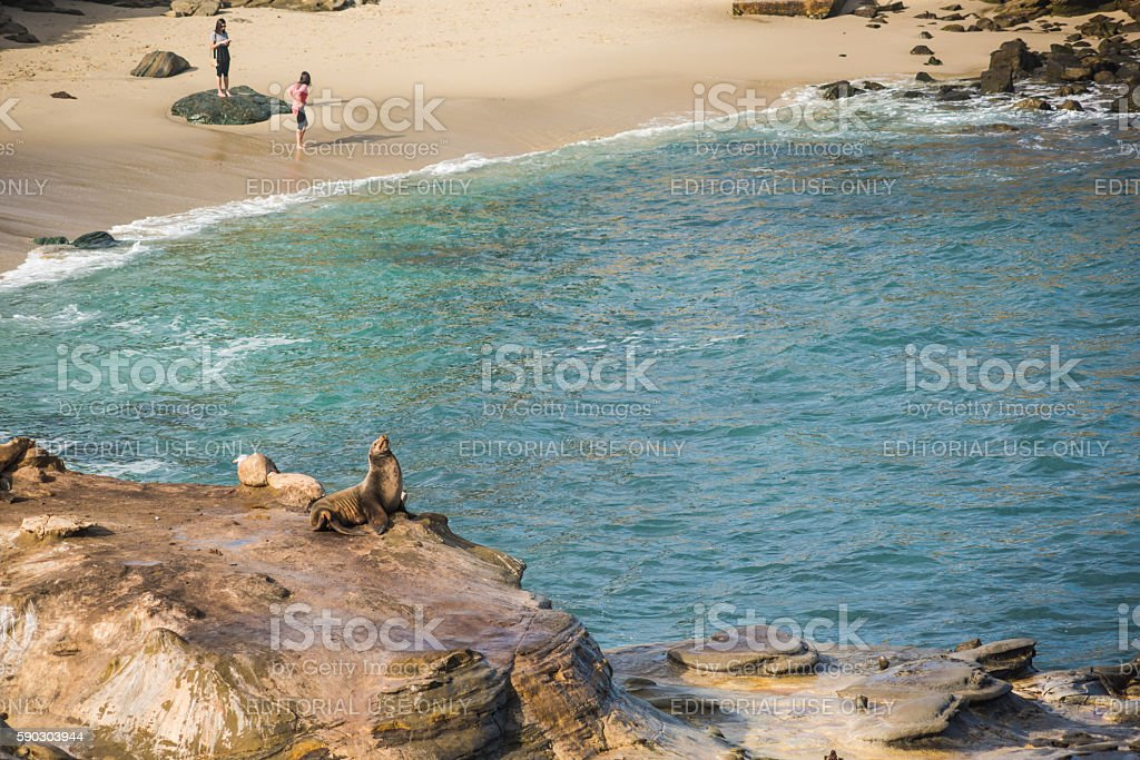 Seal sunbathing on cliff at La Jolla cove with people stock photo