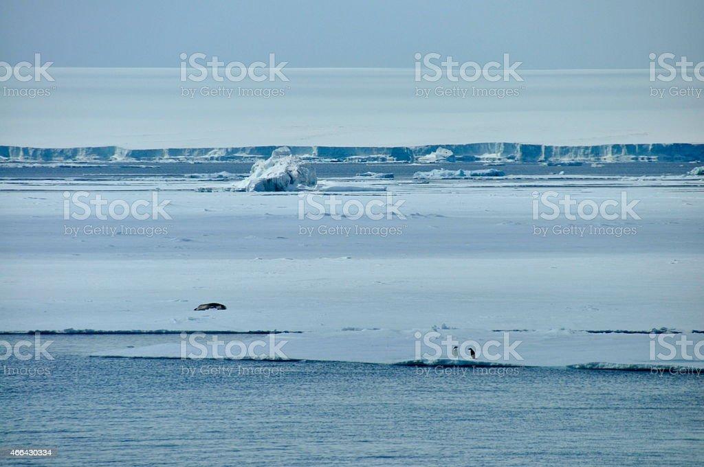 Seal sunbathing on icesheet stock photo