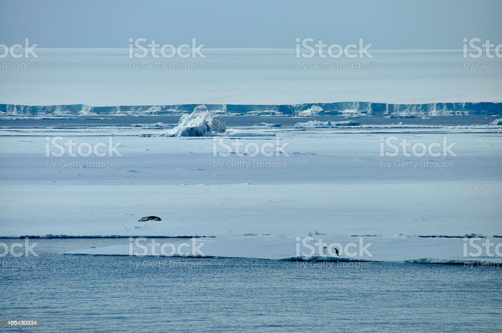 Seal sunbathing on icesheet stock photo