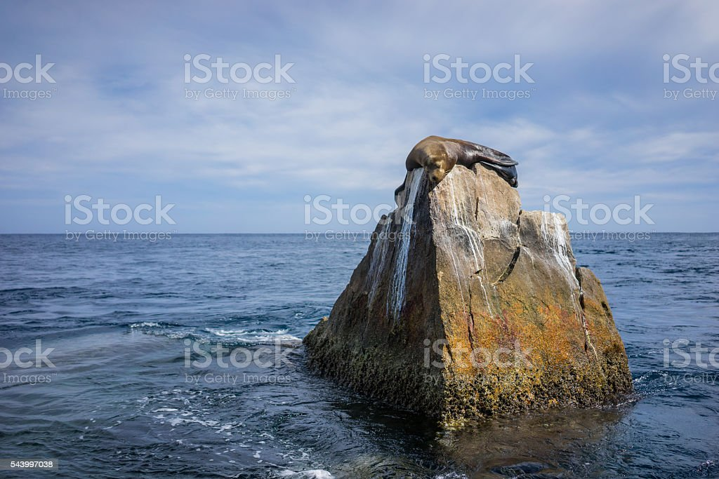 Seal sunbathing on the red cliffs of the World's End stock photo