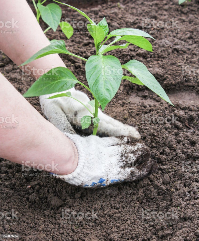 Seal the land by hand. stock photo