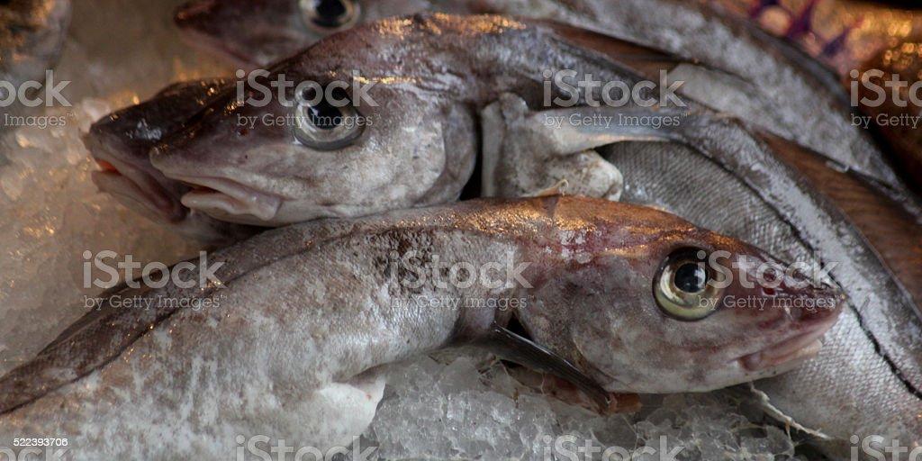 Sealife Scene stock photo
