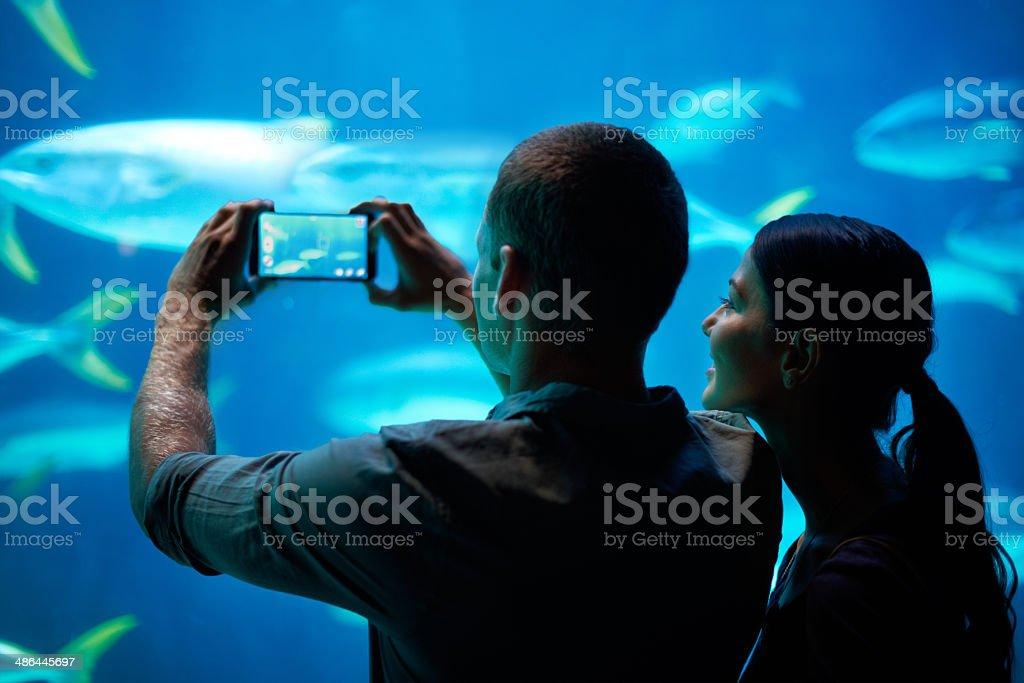Sea-life snapshots stock photo