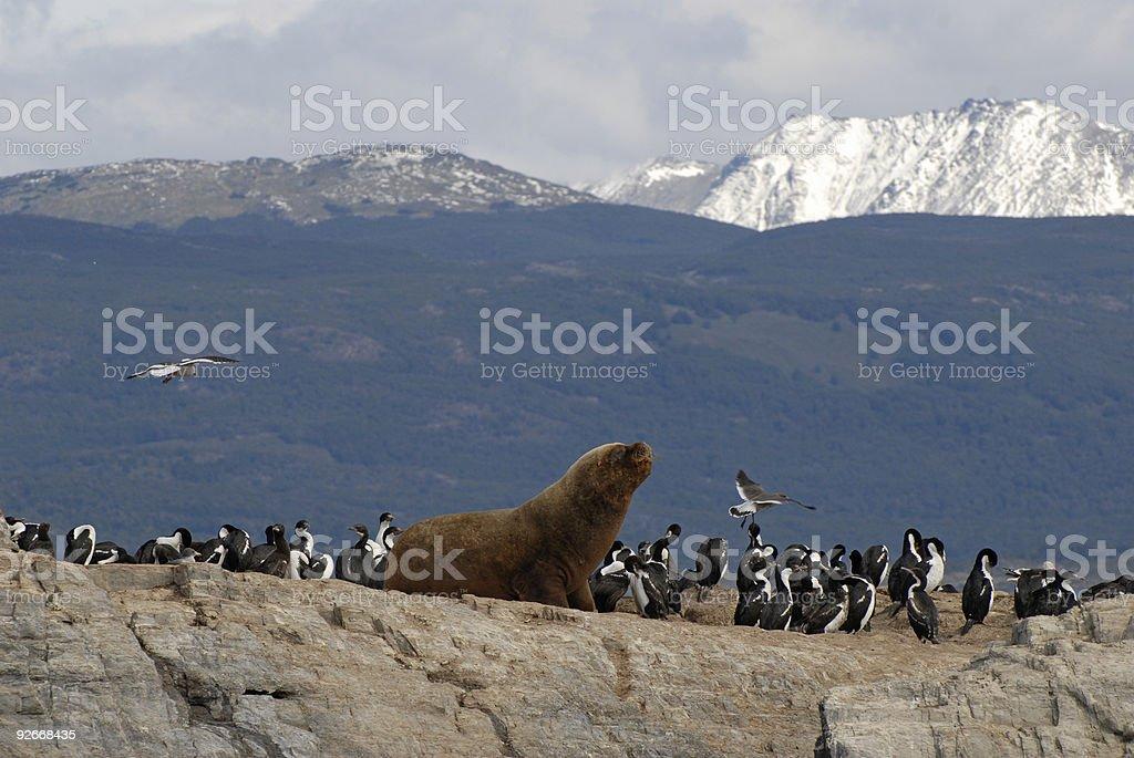 Sealion and sea birds. stock photo