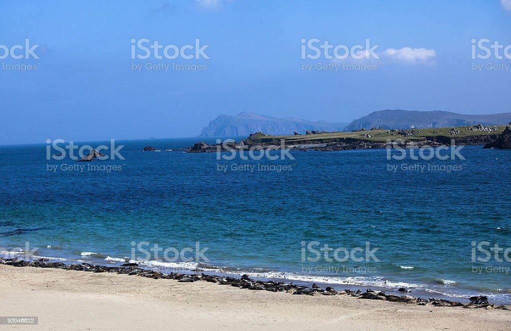 Seals line a beach, Ireland stock photo