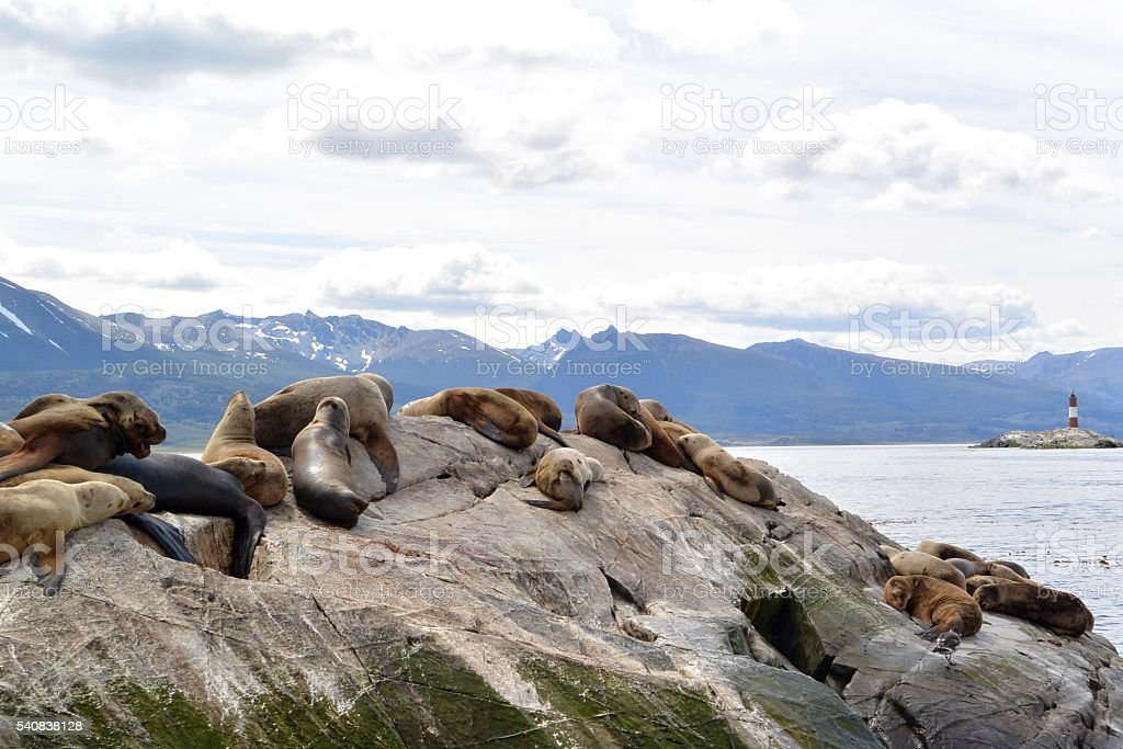 Seals on a rock with lighthouse and mountains stock photo
