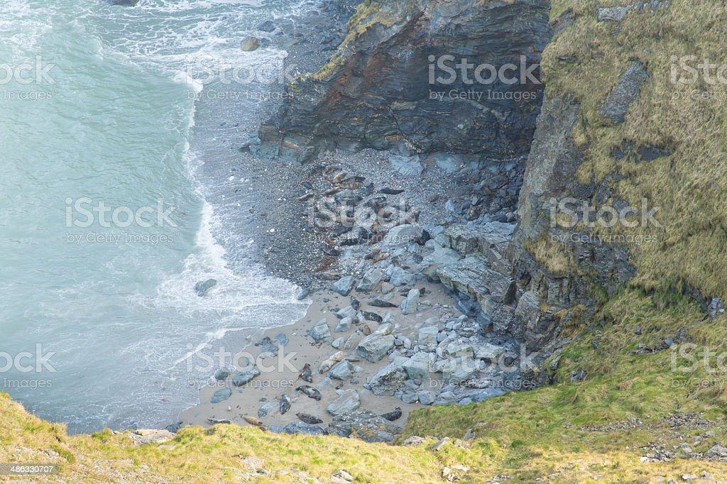 Seals on beach St Ives Bay Cornwall England UK stock photo