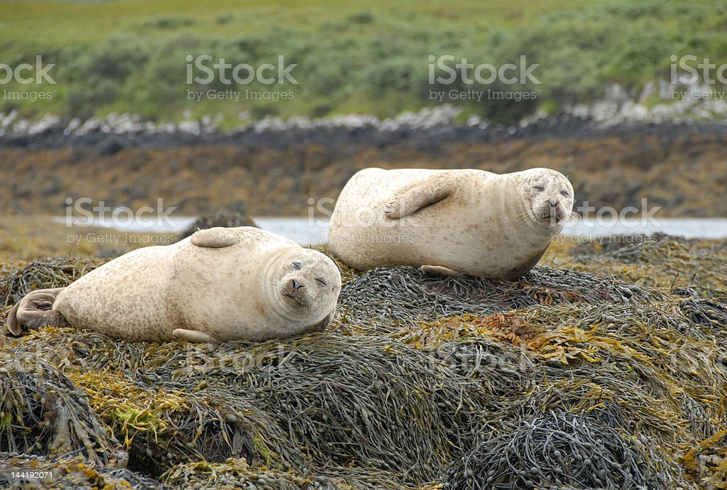 Seals stock photo