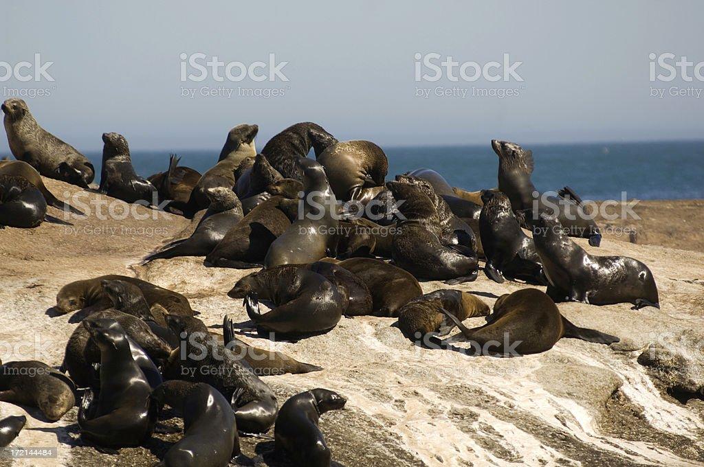 Seals stock photo