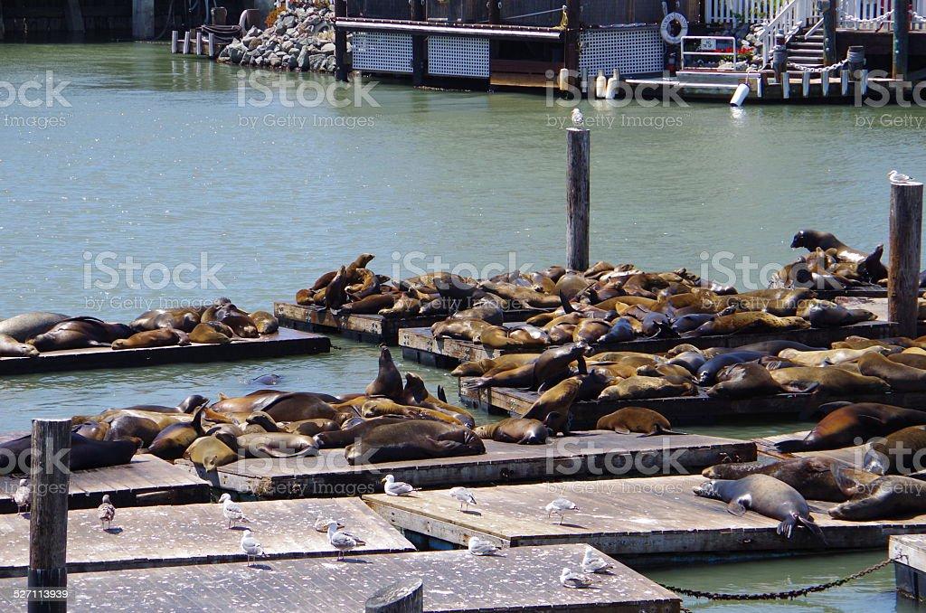 Juntas, Pier39 en San Francisco foto de stock libre de derechos