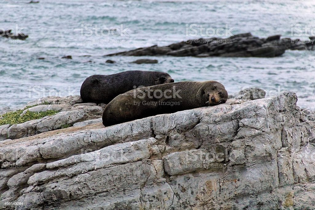 Seals resting on a rock in Kaikoura beach, New Zealand stock photo