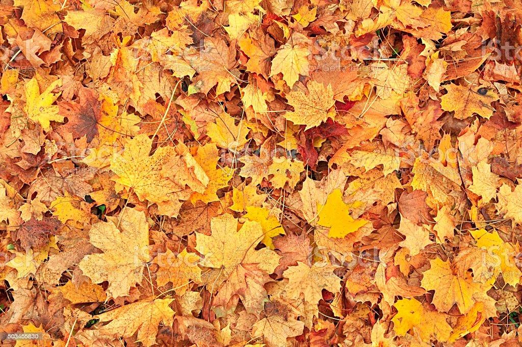 Seamless autumn leaves background stock photo