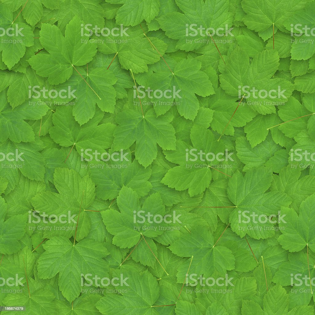 Seamless Background With Leaves royalty-free stock photo