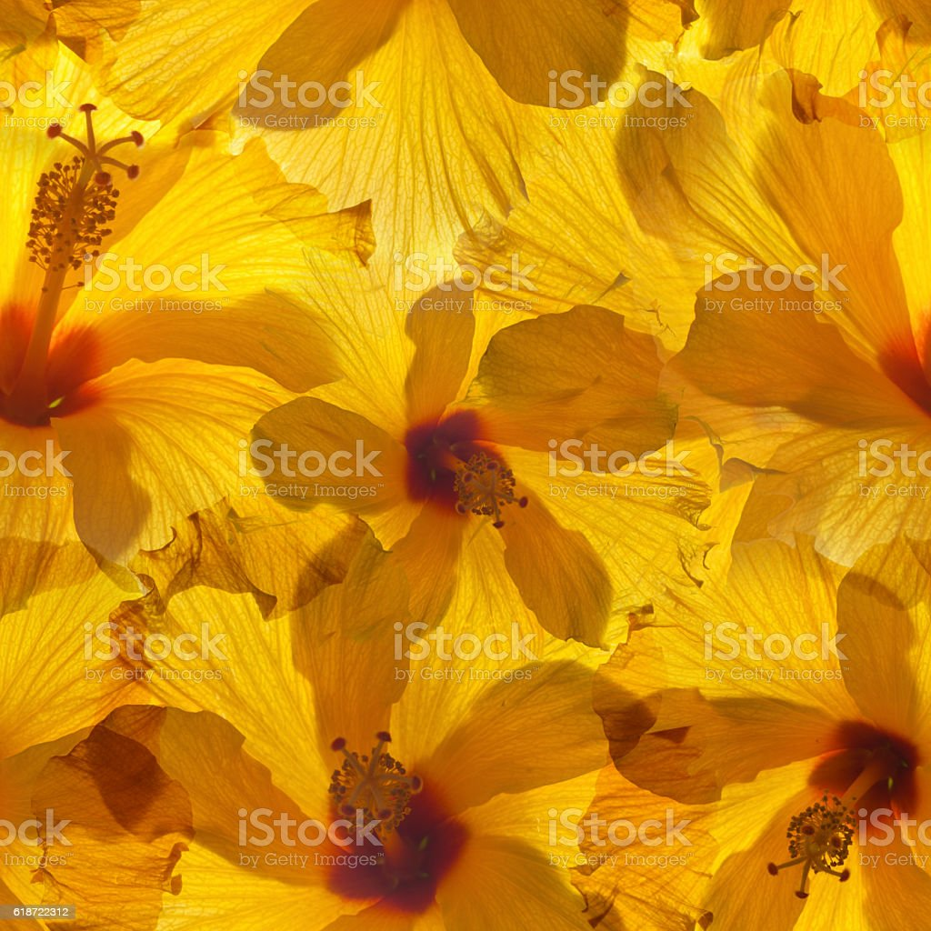 seamless background with yellow hibiscus stock photo