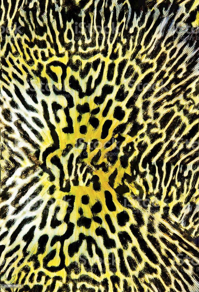 Seamless Colorful Animal Skin Pattern stock photo