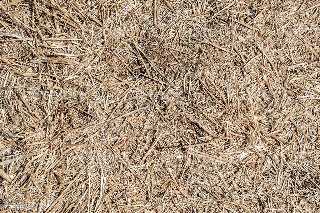 Seamless dry grass background. Nature themes. stock photo