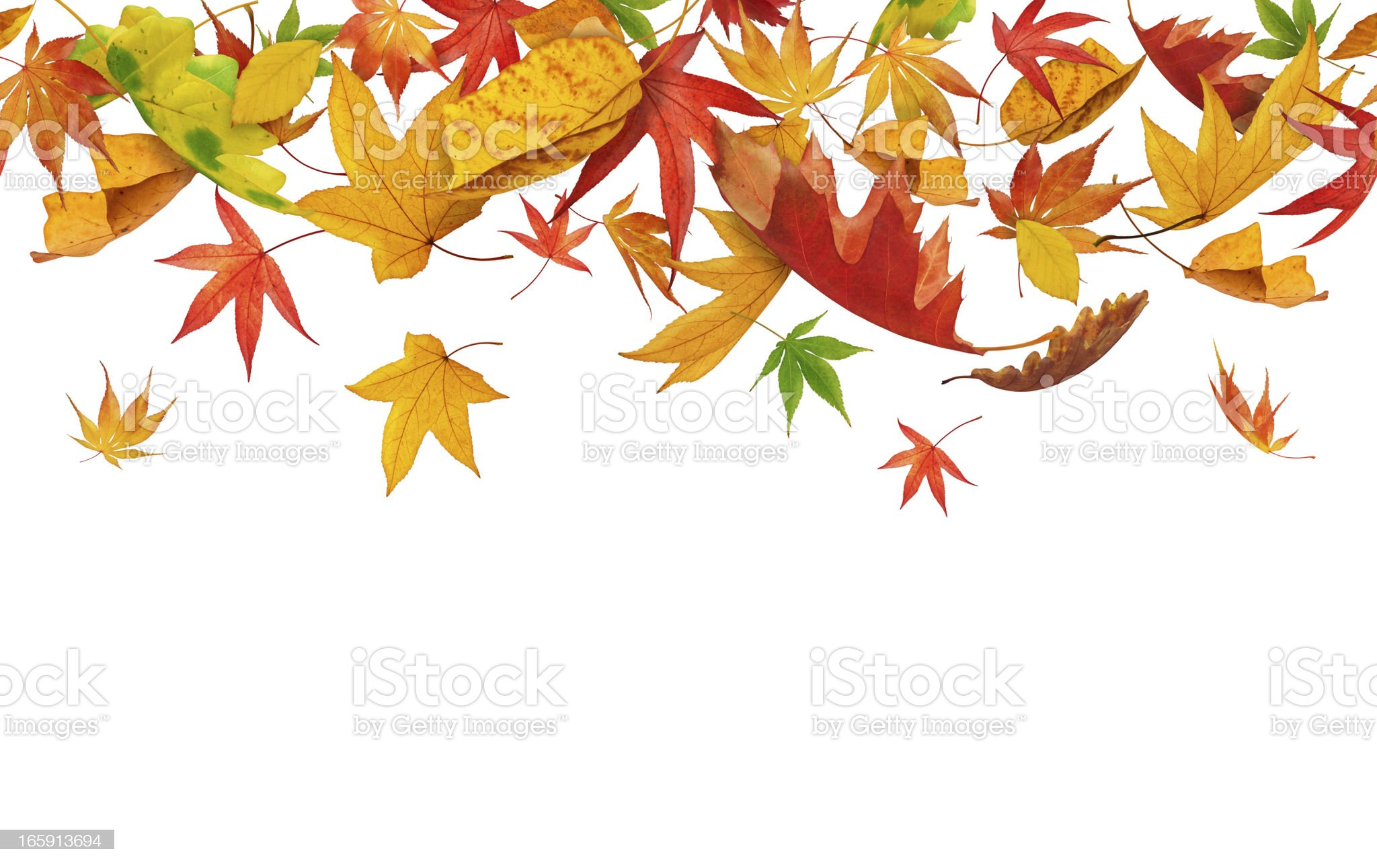 Seamless Falling Autumn Leaves royalty-free stock photo