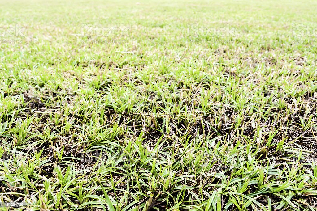 Seamless grass field royalty-free stock photo