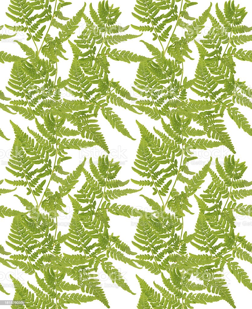 seamless green fern branch background royalty-free stock photo