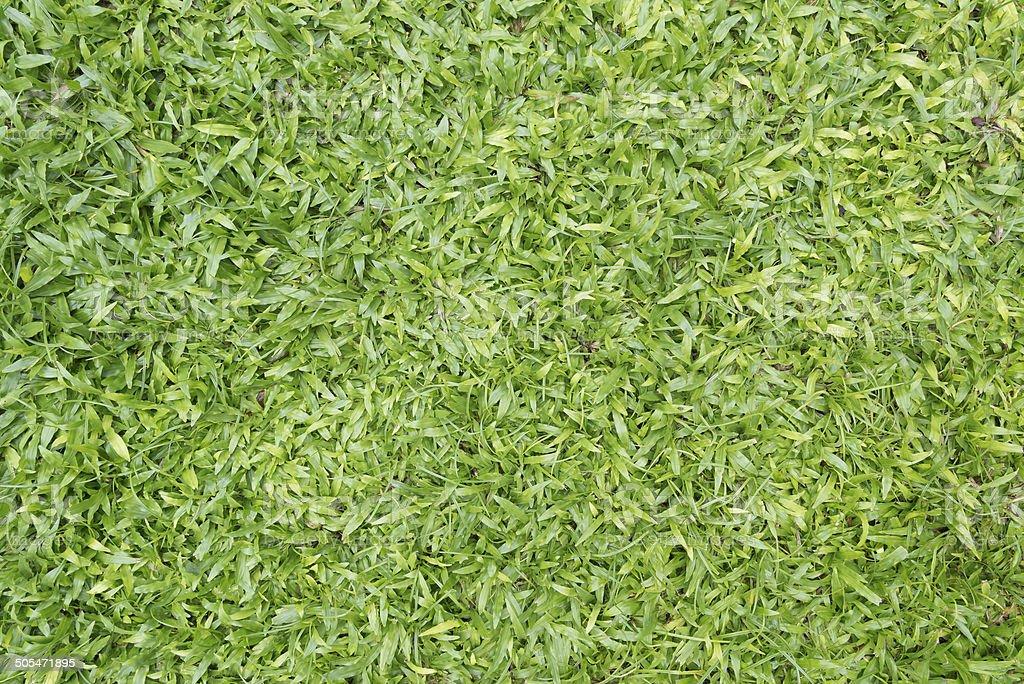 Seamless green grass stock photo