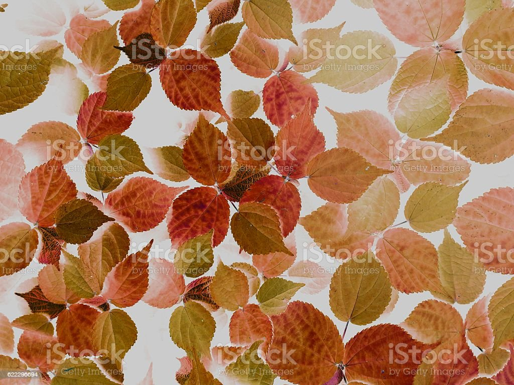 seamless leaves texture background stock photo