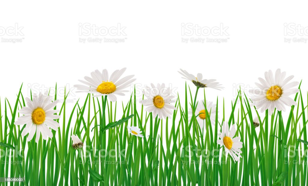 Seamless Meadow With Daisies royalty-free stock photo