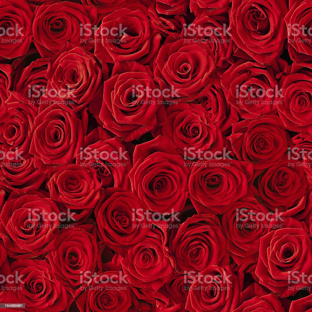 Seamless multiple red roses background stock photo