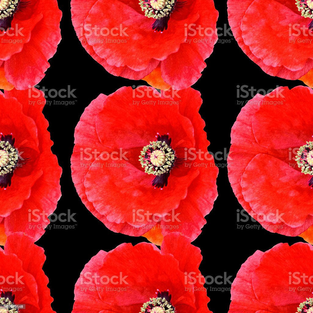 Seamless pattern large poppies black background vector art illustration
