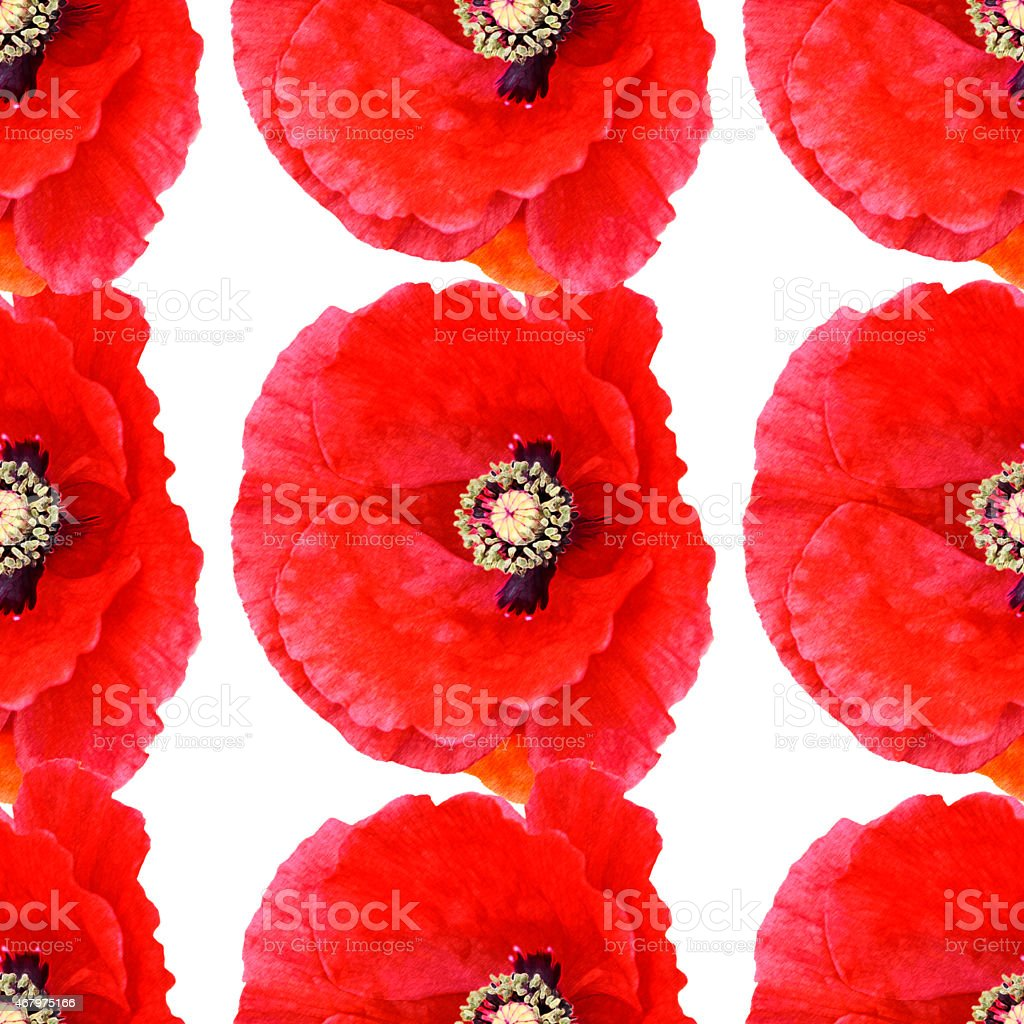 Seamless pattern large poppies white background vector art illustration