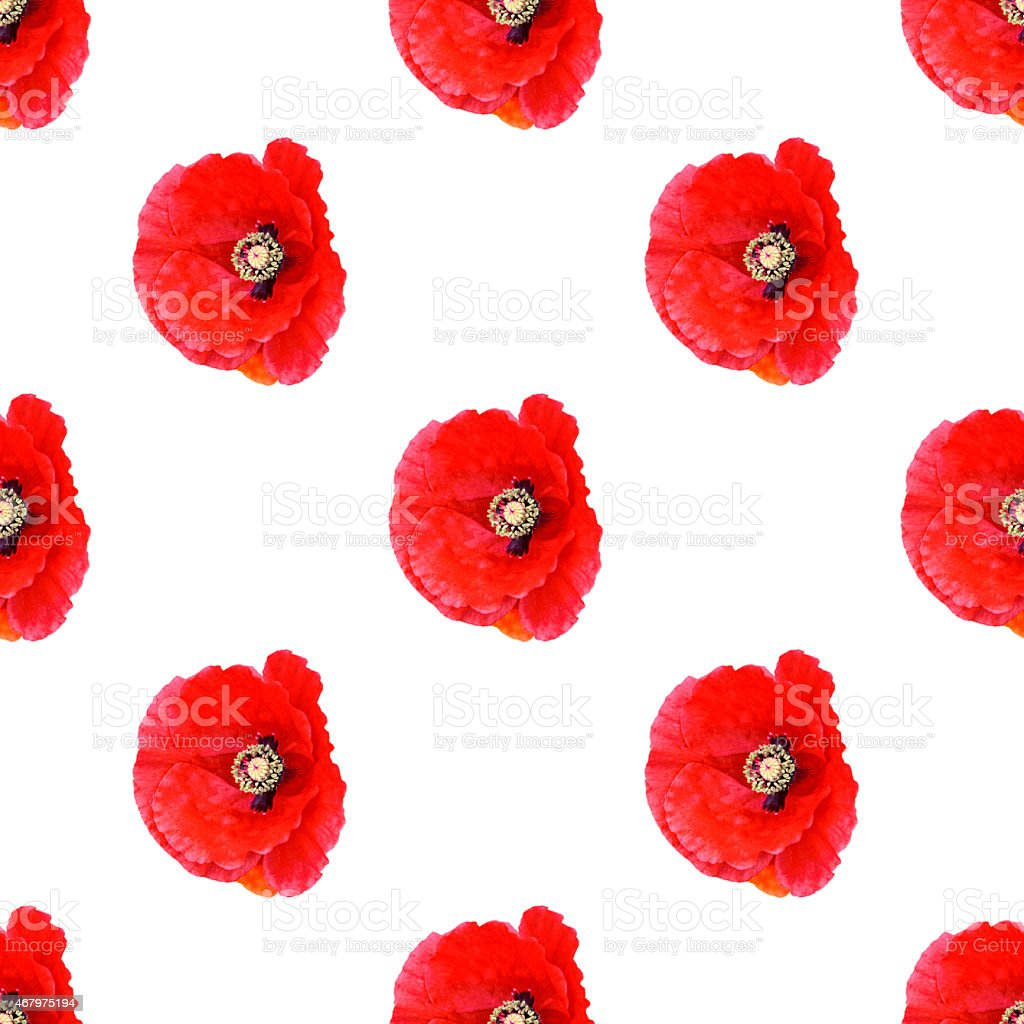 Seamless pattern red poppies offset on white background vector art illustration