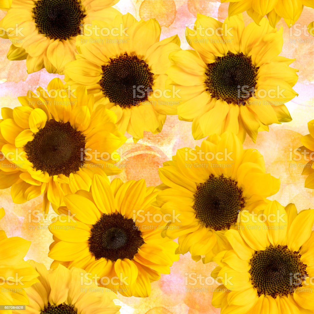 Seamless pattern with yellow sunflowers on pastel watercolor tex stock photo
