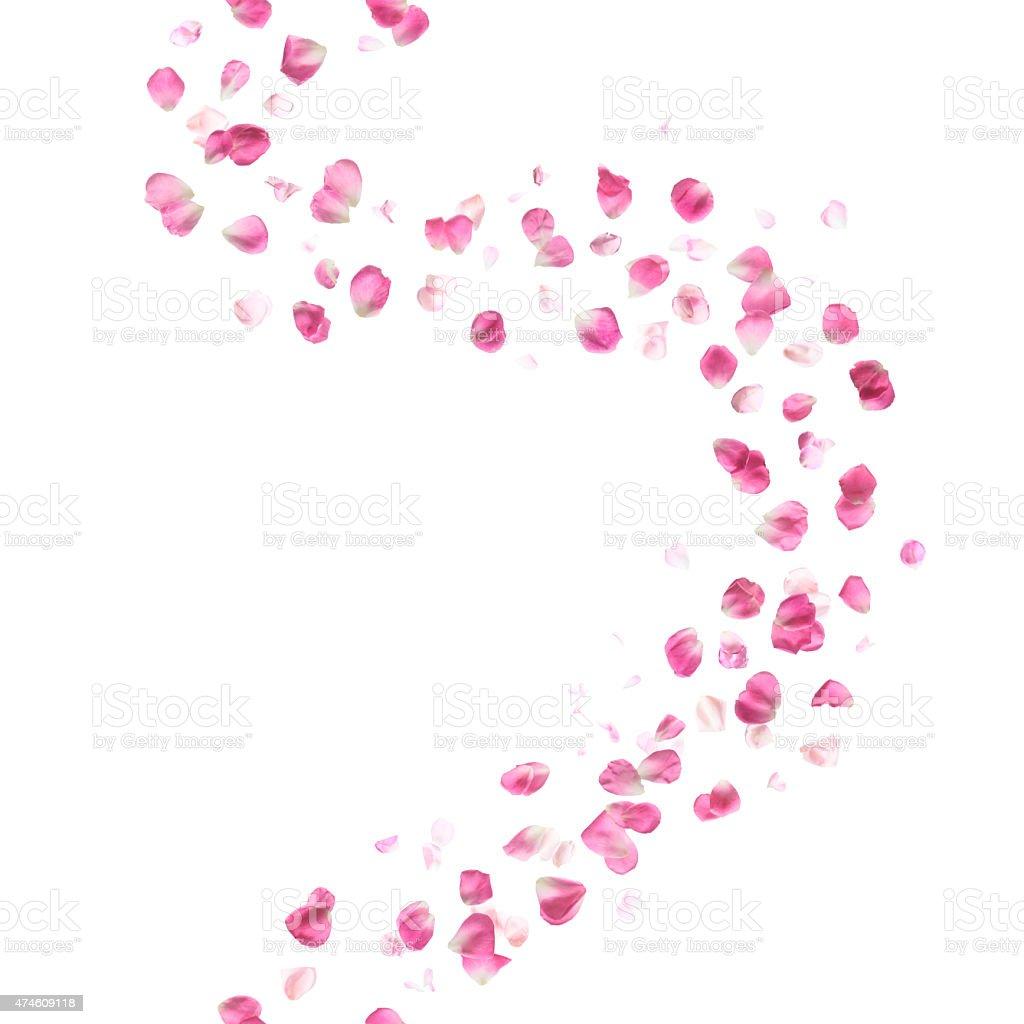 Seamless Pink Rose Petals Curve stock photo