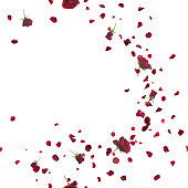 Seamless Red Roses Breeze on White