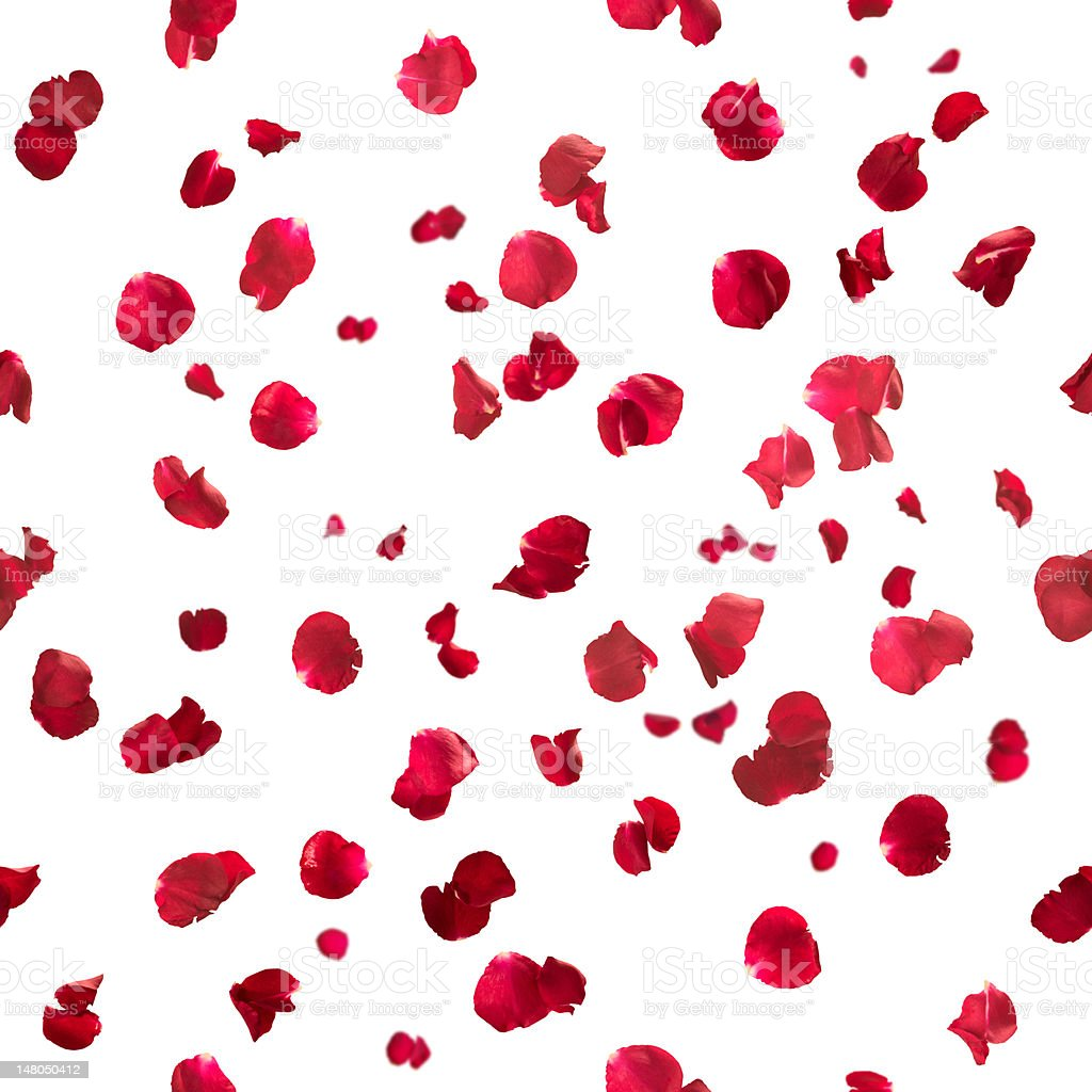 Seamless rose petals stock photo