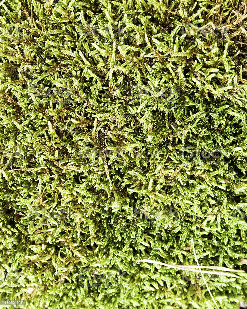 Seamless texture - marsh moss royalty-free stock photo