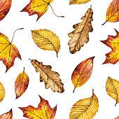 Seamless watercolor autumn pattern of leaves oak, maple, elm
