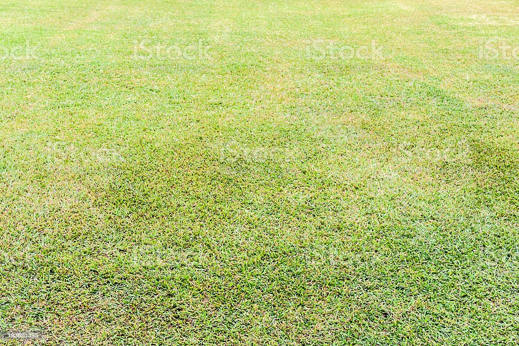 Seamless wet grass field royalty-free stock photo