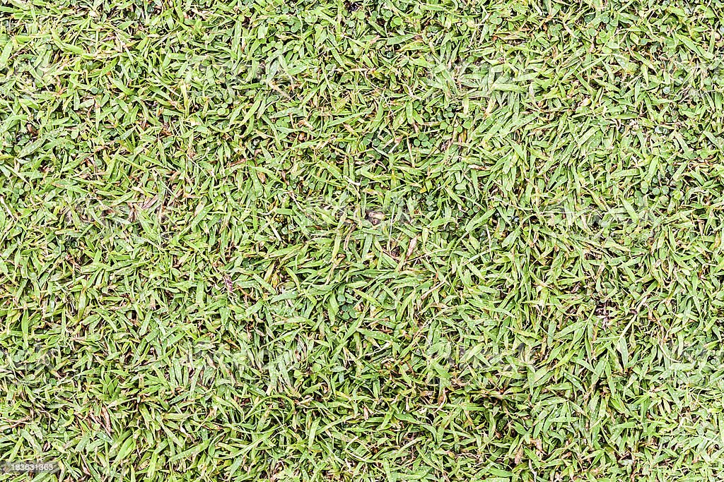 Seamless wet grass field surface royalty-free stock photo