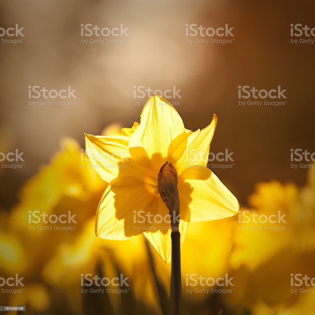 Search for light royalty-free stock photo