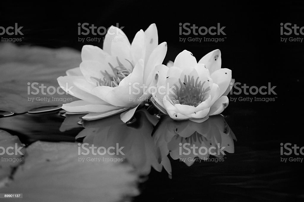 Searose reflection in black and white stock photo