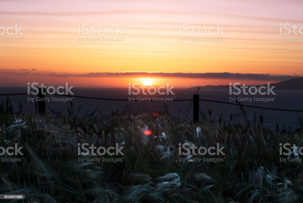 Seascape at sunset with grasses on the foreground. stock photo